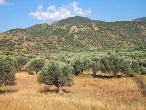 Anaxos, Lesbos