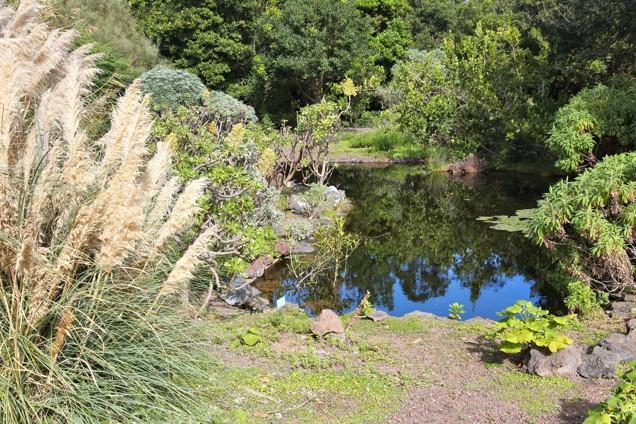 Botanická zahrada Jardin Canario Viera y Clavijo, Gran Canaria