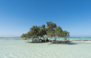 Mangrove Beach, Egypt