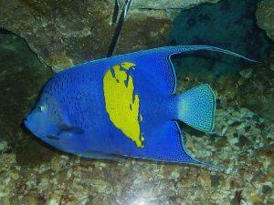 podmořský život, Egypt