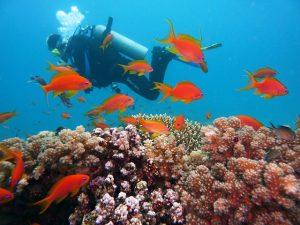 podmořský svět, Egypt