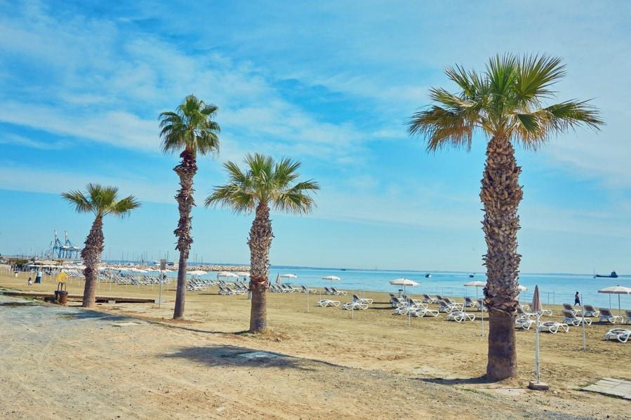 Finikoudes, Kypr