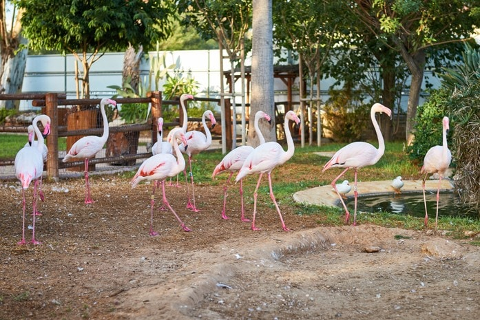 Zoo Limassol, Kypr