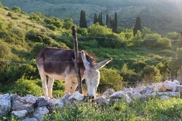 vesnice Perithia, Korfu